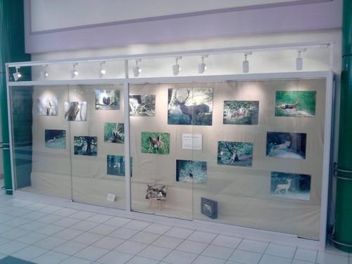 Mes clichés en exposition à Cora. P110812_08.24