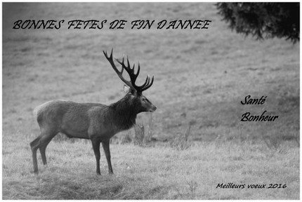 Copie (1) de cerf